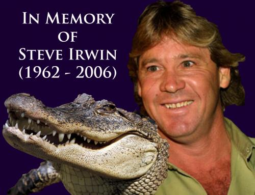 SteveIrwin